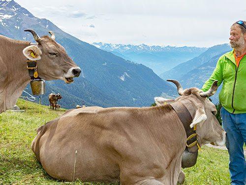 Coop in Svizzera salva un alpe nell'Alto Vallese