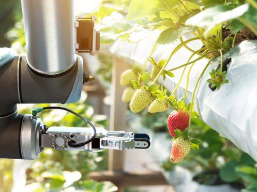 LIDL in Svezia, contribuisce con 11 milioni di corone svedesi, per accelerare la transizione alimentare